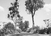 kaliningrad-koenigsberg-allee