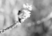 kaliningrad-koenigsberg-gumbinnen-karszamupchen-gruenfliess