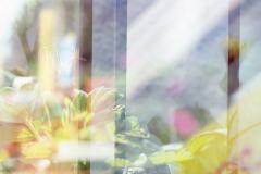 4-analog-mehrfachbelichtung-diapositiv-hamburg-altona-pflanzen-blumen