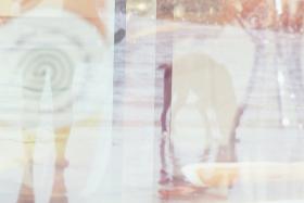 4-analog-mehrfachbelichtung-diapositiv-hamburg-elbe-hund
